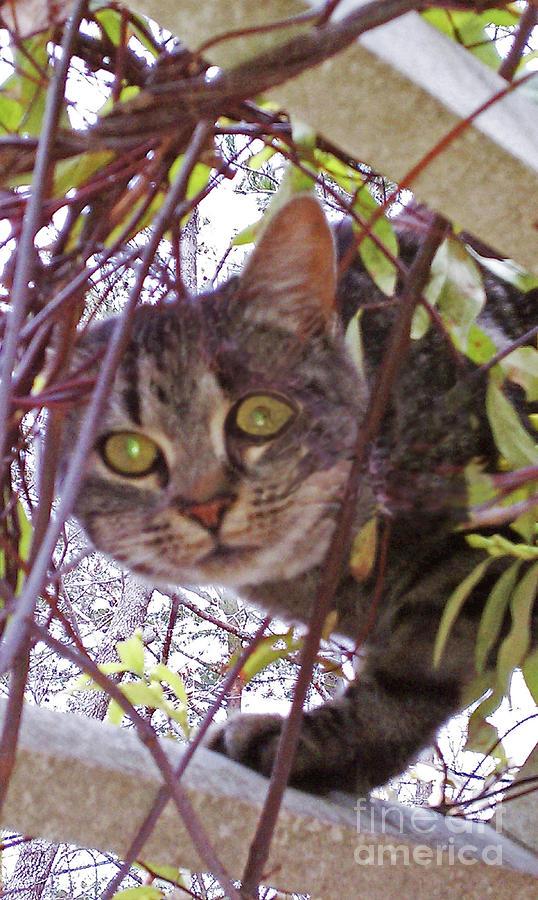 Cat In The Arbor Mixed Media