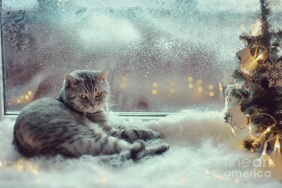Pets Photograph - Cat In The Winter Window by Alekuwka