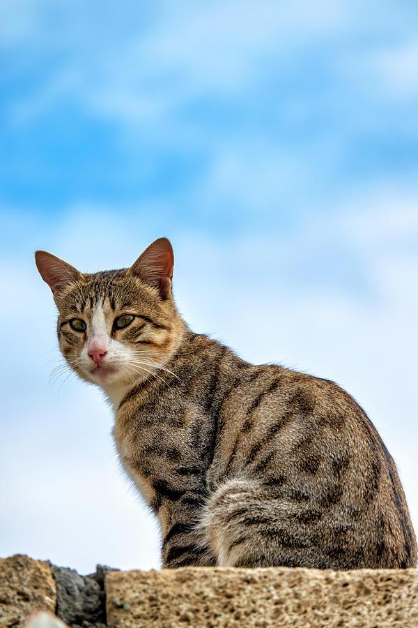 Cat on a wall by Fabrizio Troiani