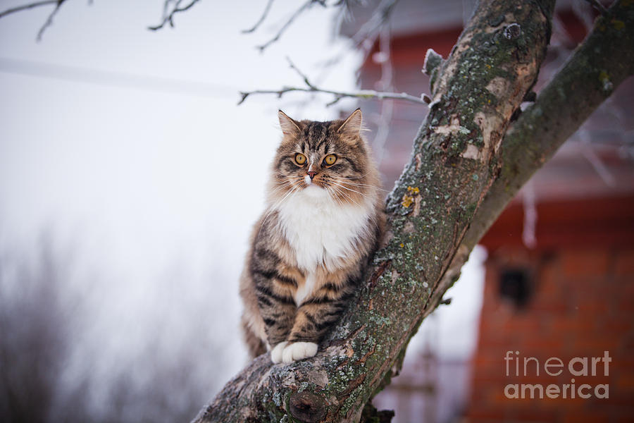 Play Photograph - Cat Outdoors In The Winter Is On The by Dezy
