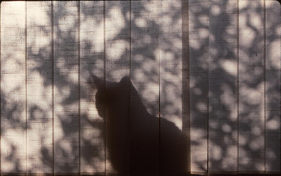 Cat Photograph - Cat Silhouette by Marty Klar