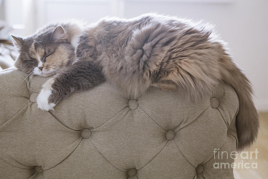 Rest Photograph - Cat Sleeping On The Couch by Gipsy