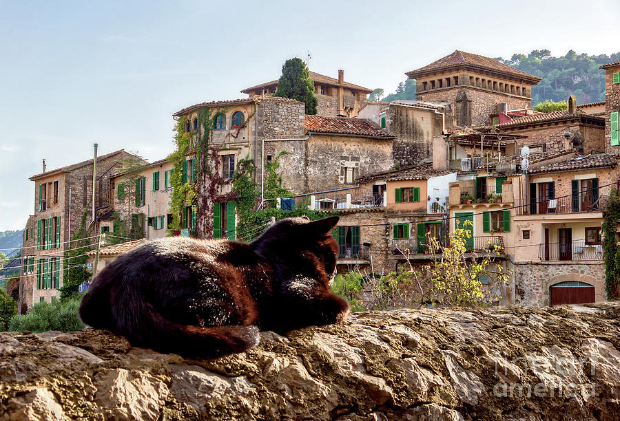 Cat sunbathing on a wall - Valldemossa, Mallorca by Ulysse Pixel
