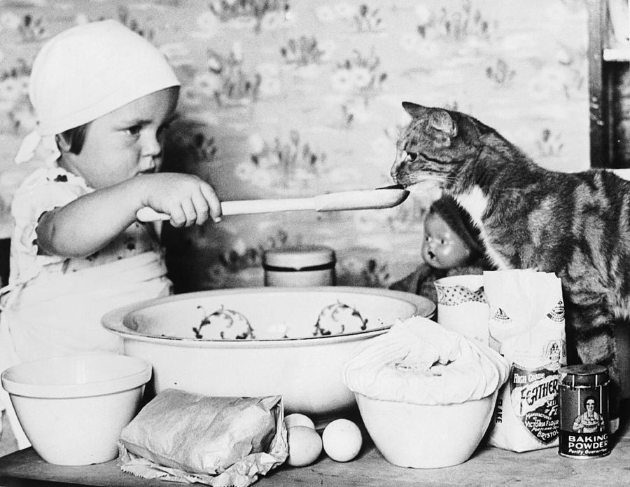 Cat Taster Photograph by Fox Photos