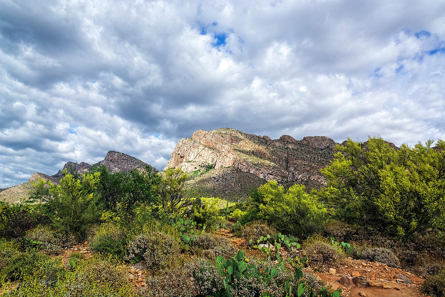 Catalina Foothills In Spring H1934 Photograph