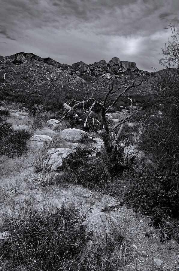 Catalina Foothills M1101 Photograph