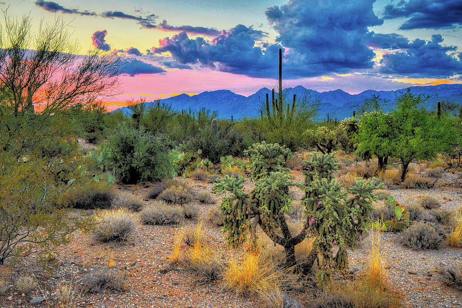 Catalina Mountains and Sonoran Desert Twilight  by Chance Kafka