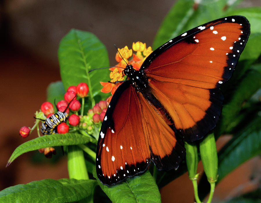 Caterpillar And Butterfly Photograph by Terry Porter