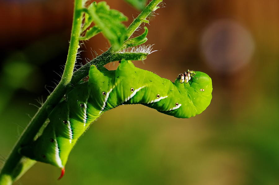 Caterpillar at lunch by Jordan Paw