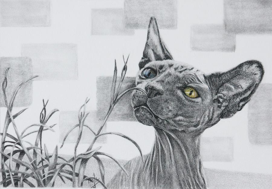 Catnip by Terri Mills