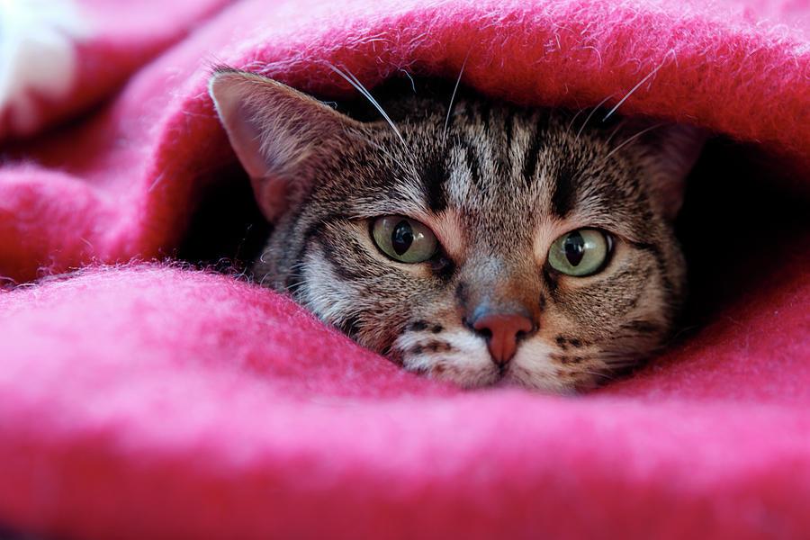 Cats Den Photograph by Christian Jacquet