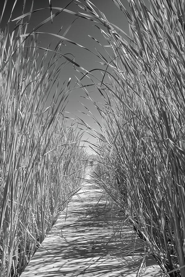 Cattails by Jim Hughes