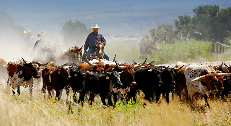 Cattle Drive Photograph by Lifejourneys