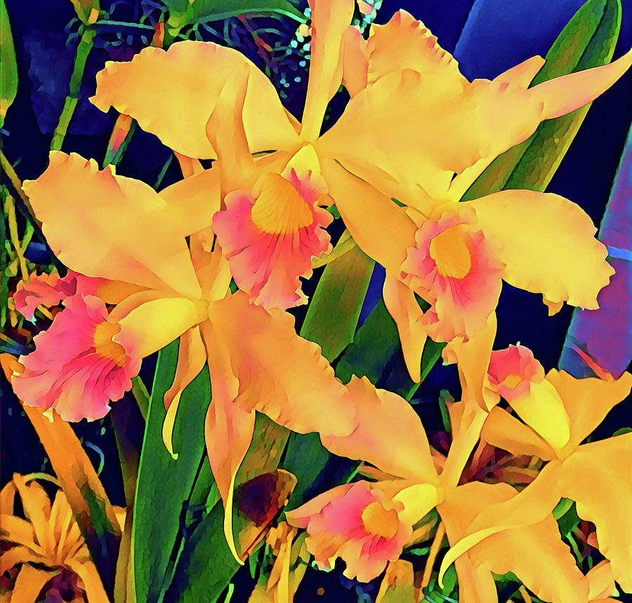 Cattleya Orchids in Peach Aloha  by Joalene Young