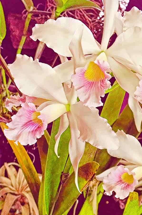 Cattleya Orchids in Rose Aloha  by Joalene Young