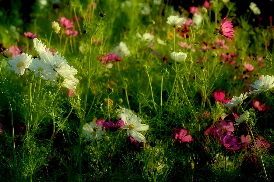 Caughlin Wildflowers by Vinnie Oakes