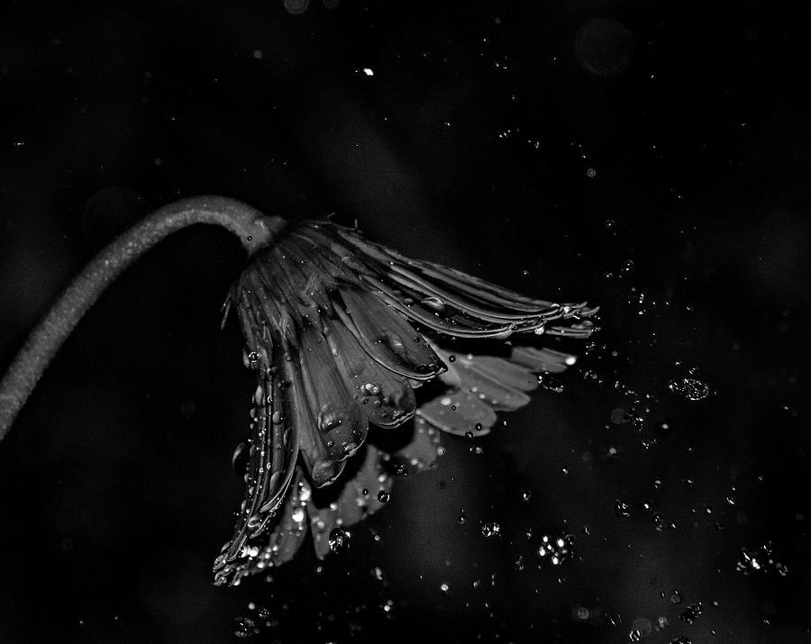Caught in the Rain by Stephen Riella