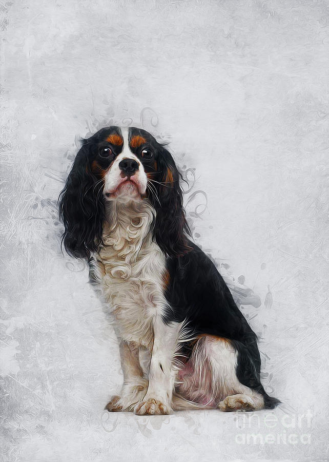 Cavalier King Charles Spaniel by Ian Mitchell
