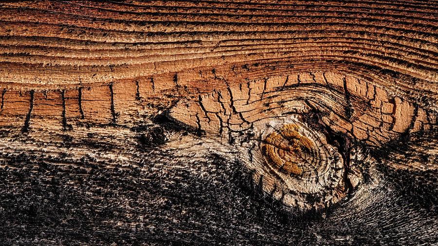 Cedar Siding Version 5 by Glenn DiPaola