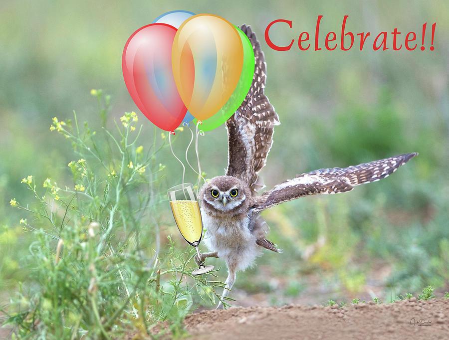 Celebrate --  by Judi Dressler