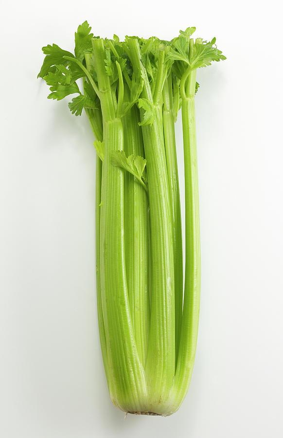 Celery Photograph by David Bishop Inc.