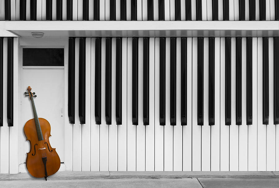 Zebra Photograph - Cello At The Door by Jacqueline Hammer