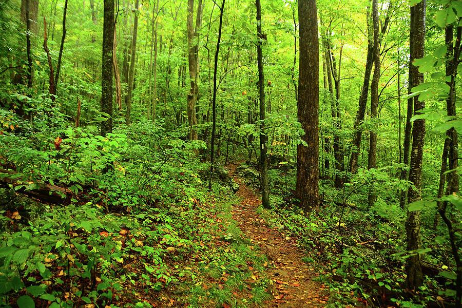 Central District Shenandoah Appalachian Trail by Raymond Salani III