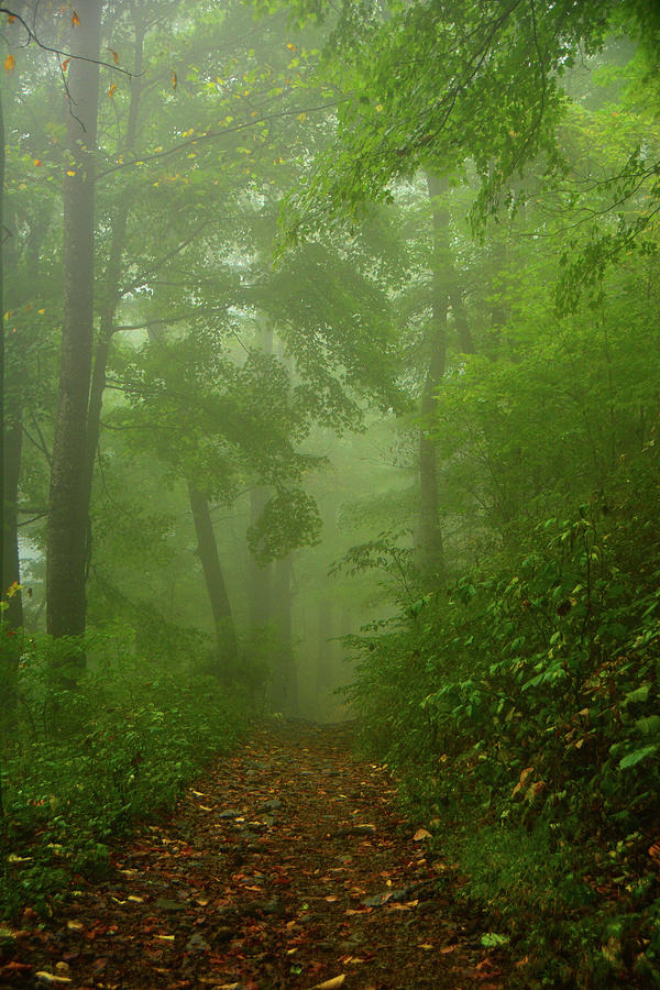 Central District Shenandoah AT Fog 2 by Raymond Salani III