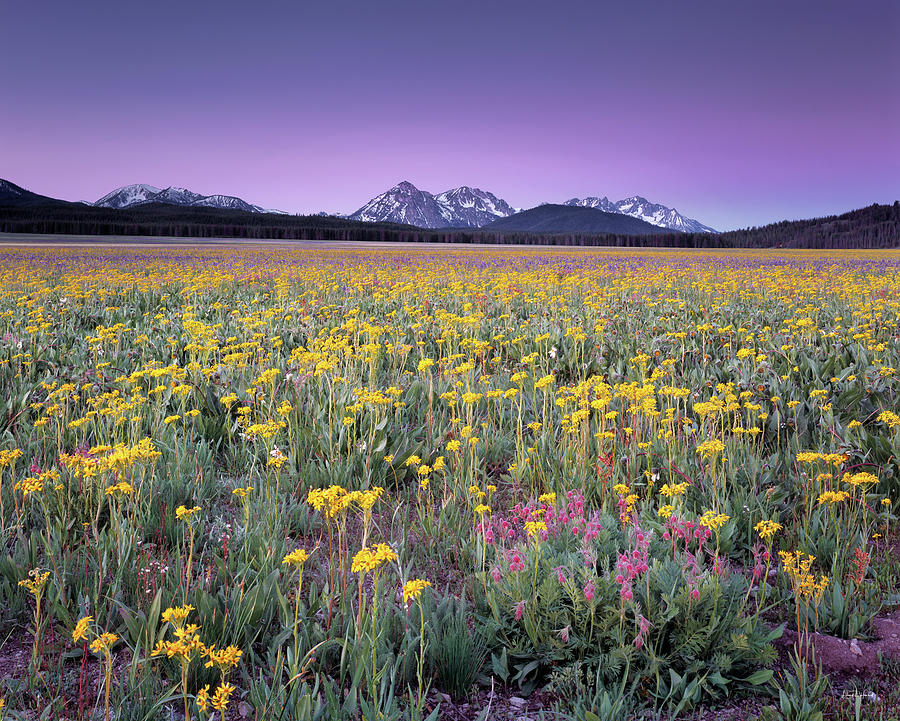 Beautiful Photograph - Central Idaho Color by Leland D Howard