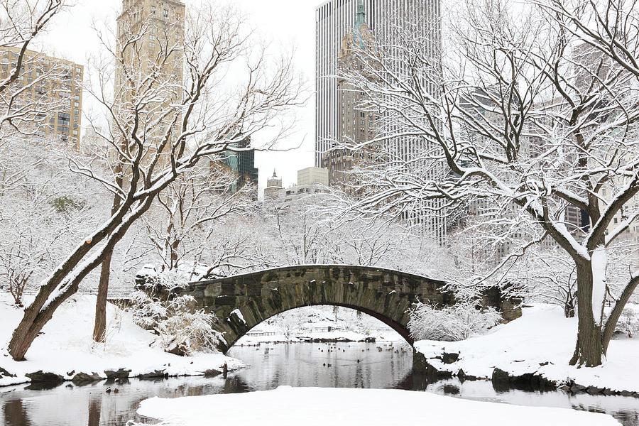 Central Park, New York Photograph by Veni