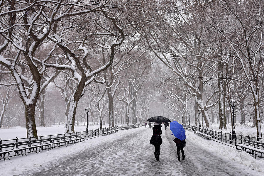 Central Park Winter Storm by Clint Buhler