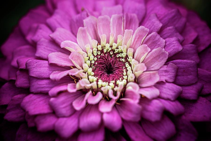 Matthew Blum Photograph - Centrifugal by Matthew Blum