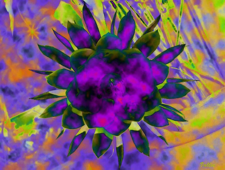 Floral Digital Art - Cereusly Solarized by Vallee Johnson