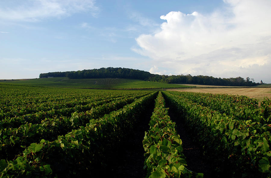 Champagne Vineyards Photograph by Matthieu Boichard