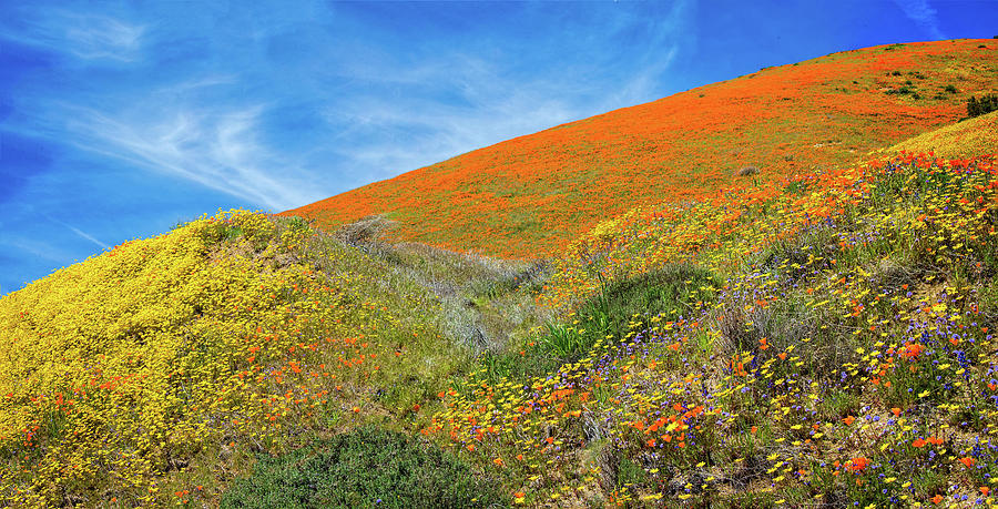 Changing Colors on the Hill - Superbloom 2019 by Lynn Bauer