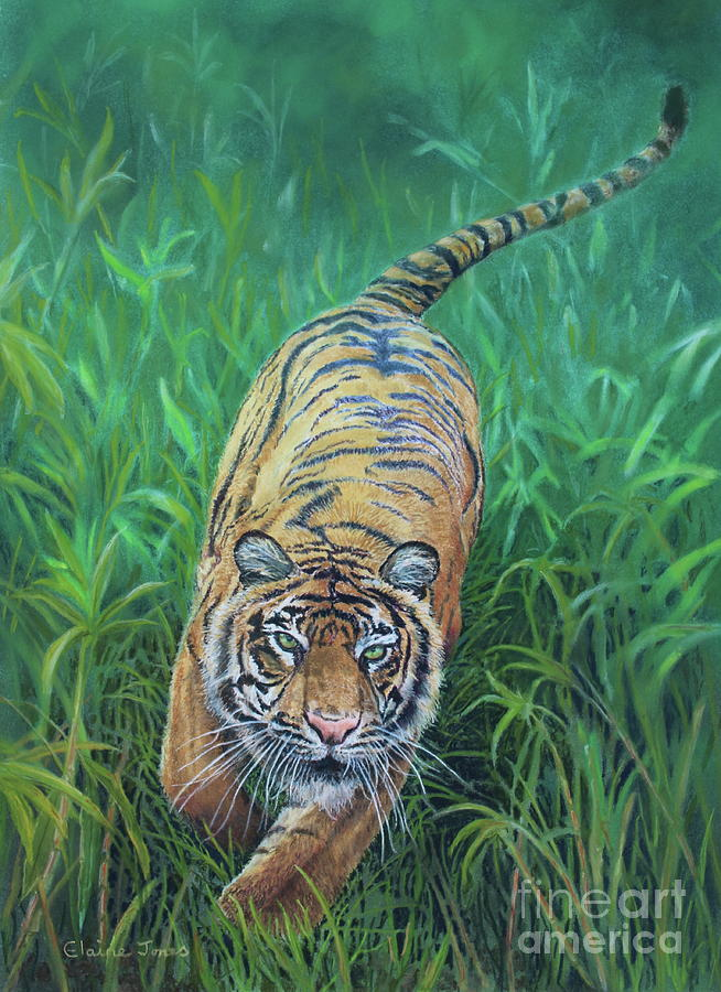 Charging Tiger by Elaine Jones