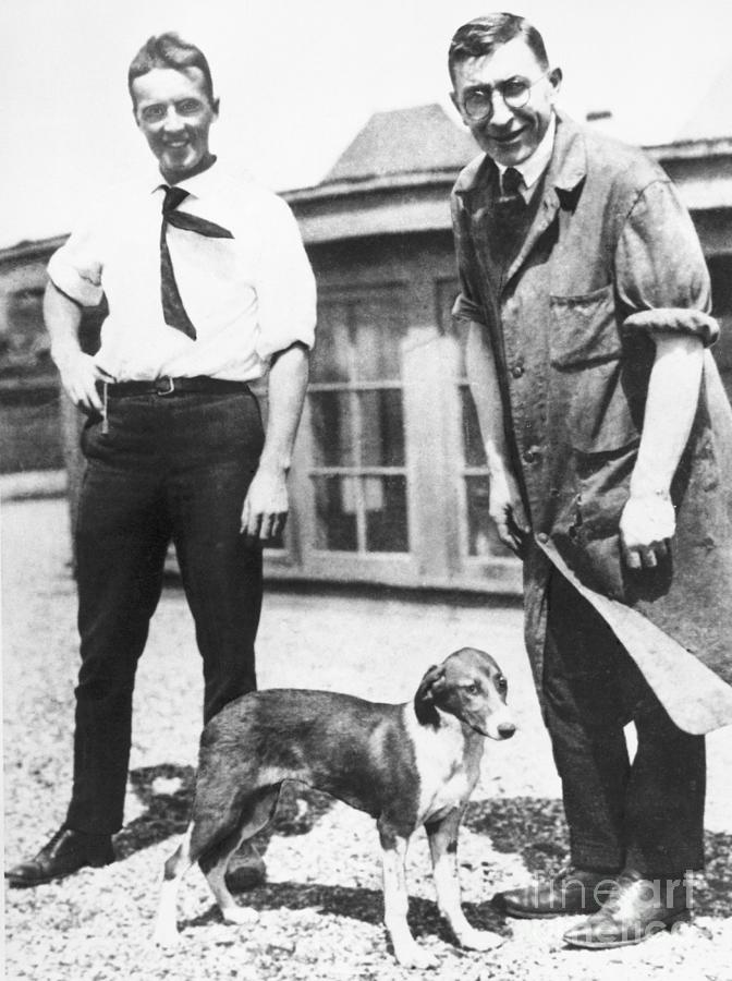 Charles Best And Frederick Banting Photograph by Bettmann