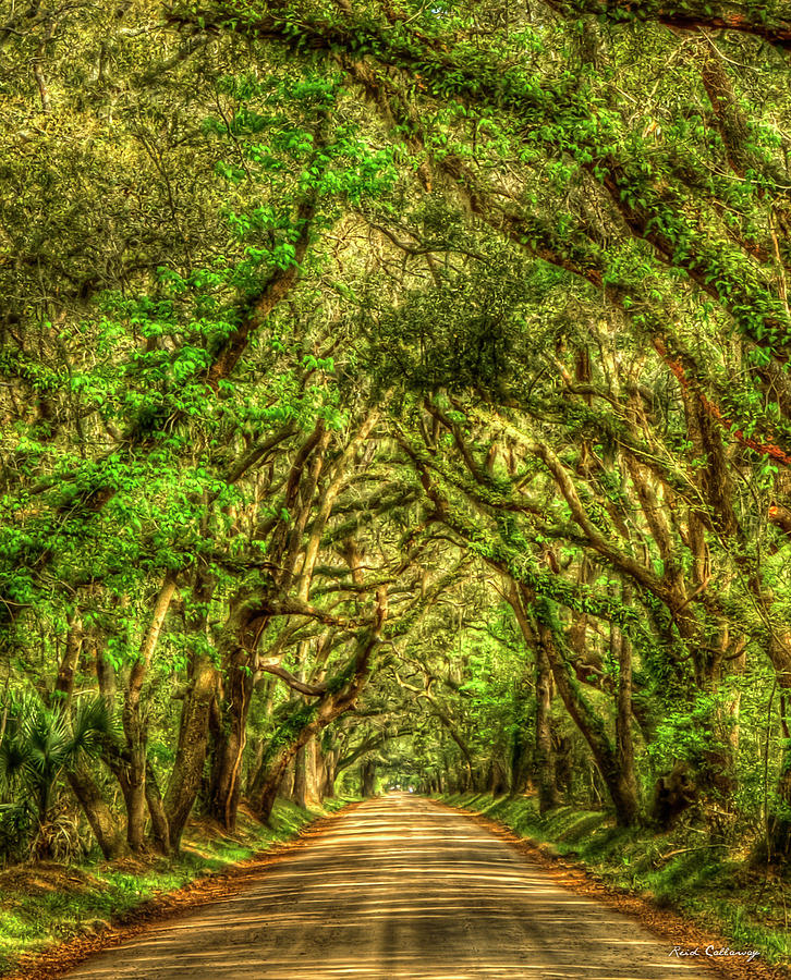 Charleston S C The Tree Tunnel Botany Bay Road Edisto Island South Carolina Landscape Art by Reid Callaway