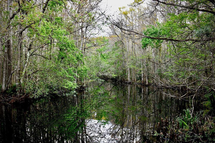 Creek Photograph - Charlie Bowlegs Creek by Carol Bradley