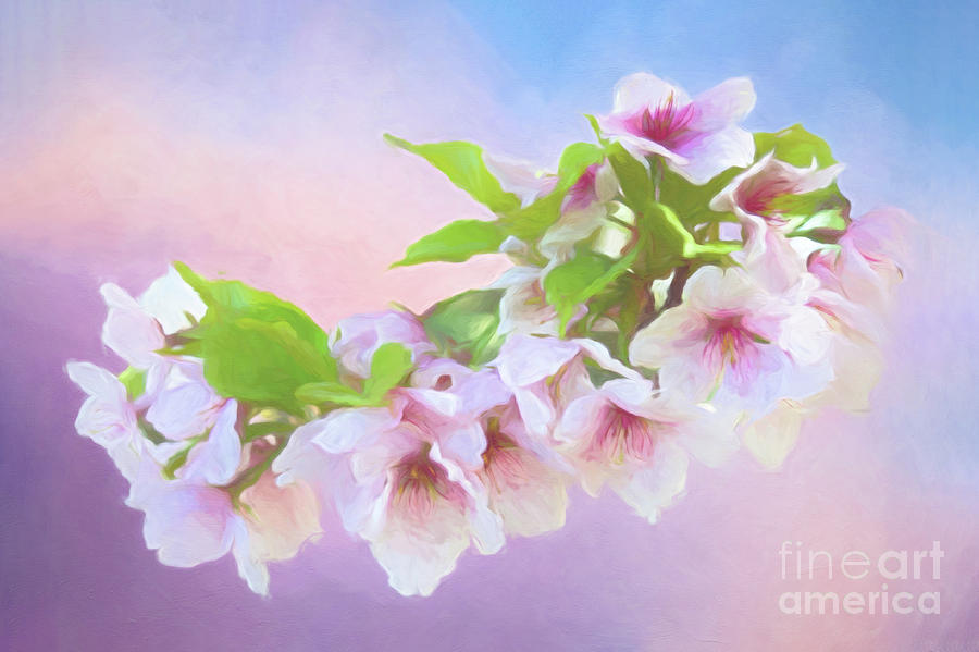 Charming Cherry Blossoms by Anita Pollak