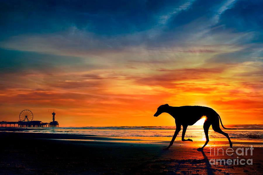 Silhouette of dog on beach sunset  by Travis Patenaude