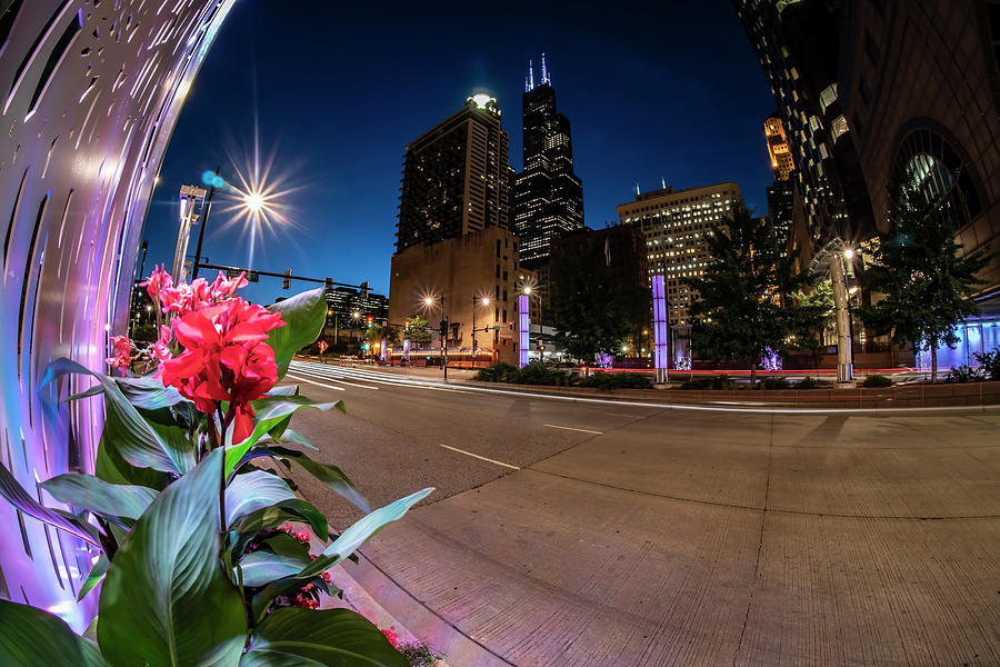 Chicago skyline and flowers at dusk  by Sven Brogren