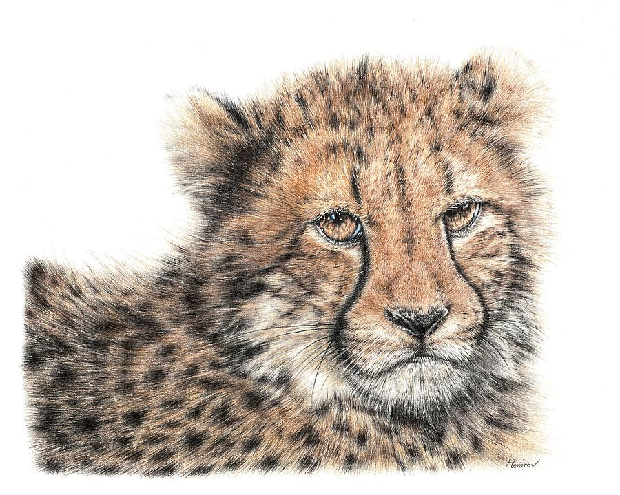 Cheetah Cub by Remrov