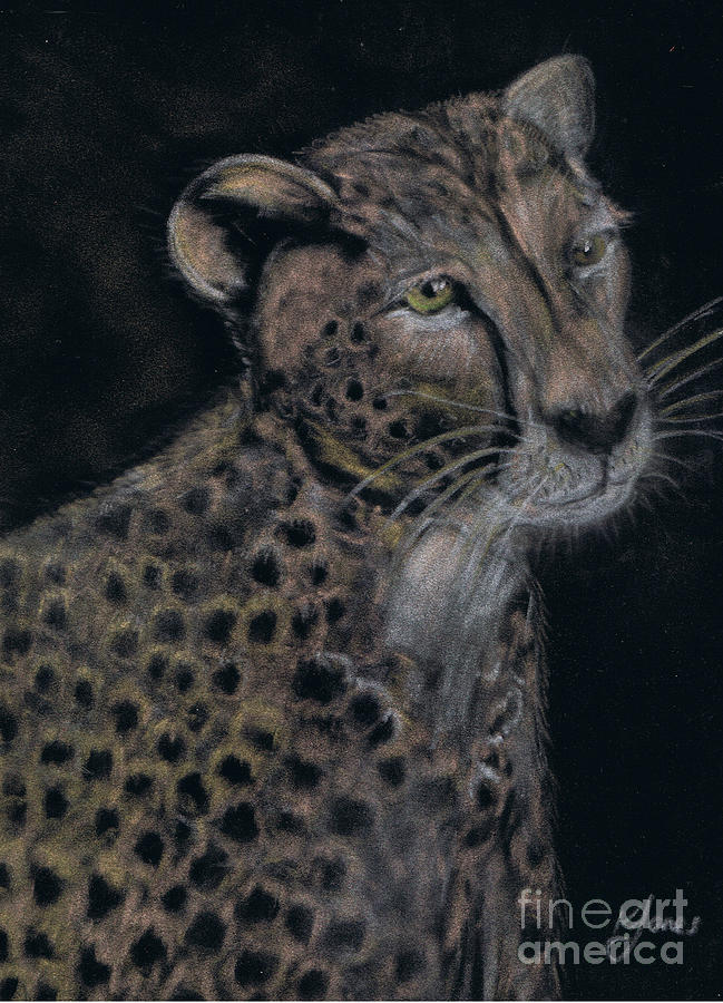 Cheetah Portrait in Pastels by Karen Jane Jones