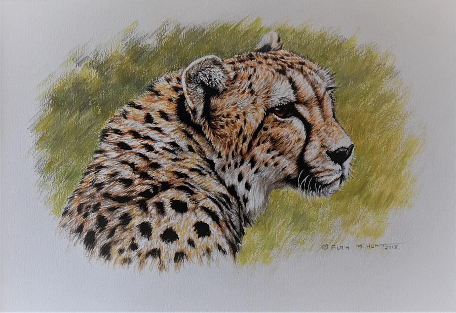 Cheetah Watercolour Portrait by Alan M Hunt