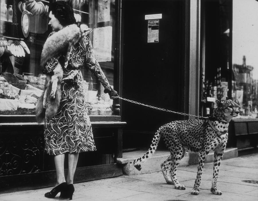 Cheetah Who Shops Photograph by B. C. Parade