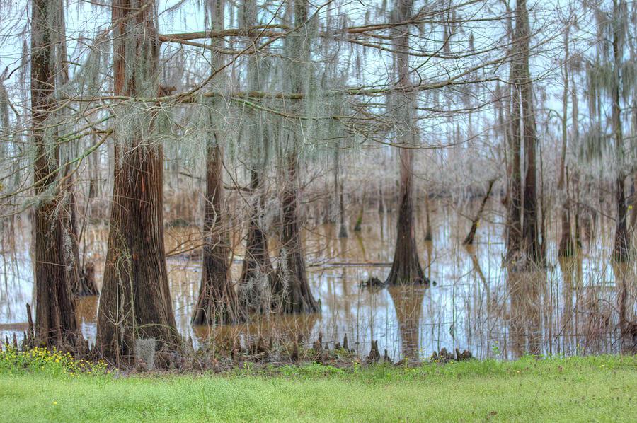 Bayou Photograph - Cheniere Lake Bayou  by Ester McGuire
