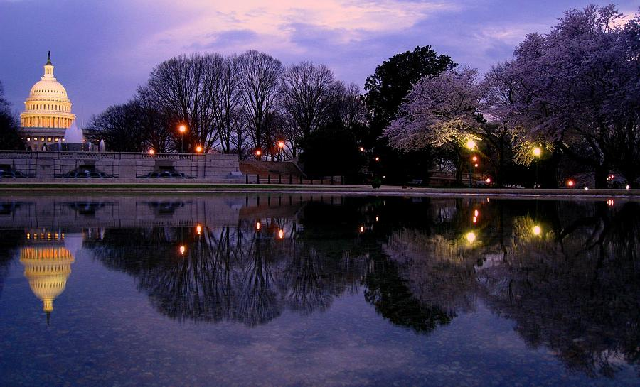 Cherry Blossom At Capitol Hill Photograph by Patrick Yuen