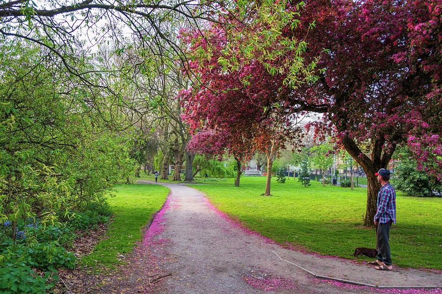 Cherry blossom carpets by IORDANIS PALLIKARAS