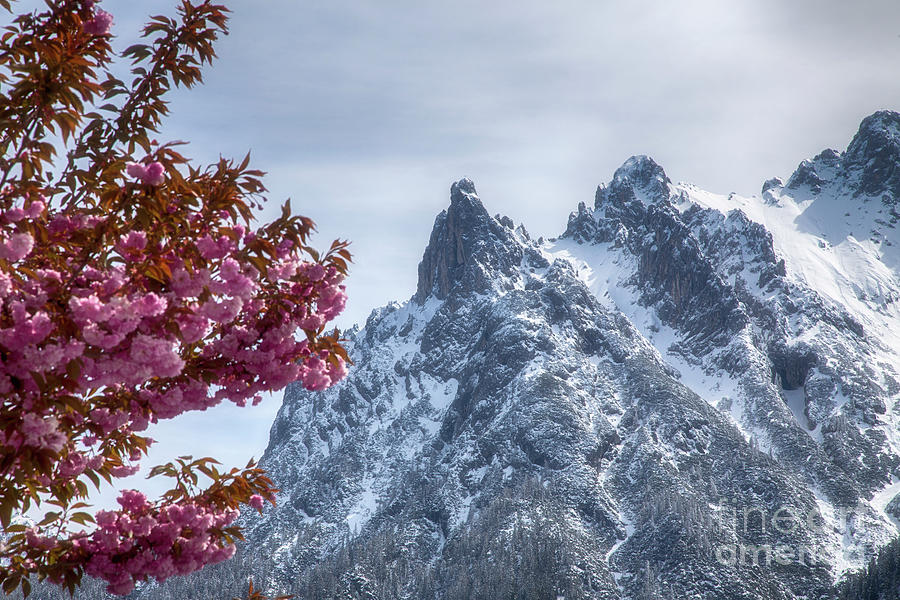 Cherry blossom in front of the snowy Karwendel by Fabian Roessler